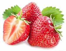 Pure Strawberry Seed Oil 100ml / Helps Protect Skin