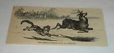 1879 magazine engraving ~ Cheetah Running Down An Antelope