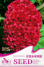 1 Pack 40 Giant Head Shaped Cockscomb Seed Celosia Cristata Garden Flowers A256
