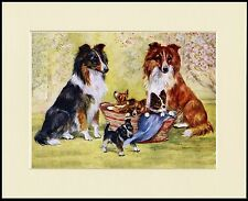 SHETLAND SHEEPDOG SHELTIE DOGS AND PUPPIES CHARMING DOG PRINT READY TO FRAME