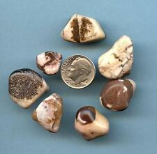 Zebra Jasper Tumbled Gemstones Lot #5