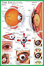 THE ANATOMY OF THE HUMAN EYE Medical Science Wall Chart Poster