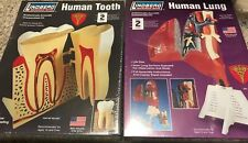 Lindberg Science Kit Lot Human Lung Anatomy & Tooth Model New Factory Sealed