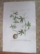 "Vintage Engraving,BRYONIA,C.1740,WEINMANN,Botanical,20x13.5"",Mezzotint"