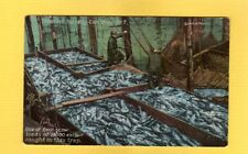 Alaska, Thlinget Packing Co. Trap No. 7 One of 2 scow loads each caught in trap