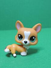 #1360 chien dog light brown Corgi with blue eyes LPS Littlest Pet Shop Figure