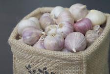 200g. Single Bulb Elephant Garlic Food Cooking Clove Food Thai Herbs GoodThai-65