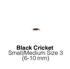 Black Crickets Small/Medium MaxiPack Live Insects Reptile Food Livefoods
