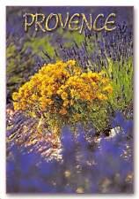 France Image de Provence, Ste PEC Septemes les Vallons, flora