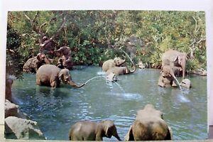 Disneyland Adventureland Elephant Bathing Pool Postcard Old Vintage Card View PC