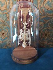 Squelette De Chauve Souris sous Globe-taxidermie-cabinet de curiosité