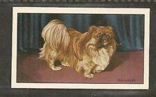Rare 1936 UK Dog Art Full Body Gallaher A Series Cigarette Card PEKINGESE PEKE