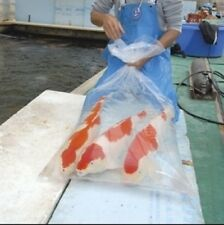 (1,20€/Stk.)10 Koi Fischbeutel Transportbeutel  Fischtransportbeutel 50x120 cm