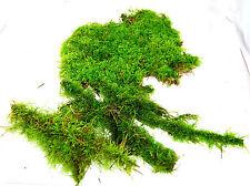 Live moss mix #7 Terrarium moss, vivarium moss, for frogs or orchids