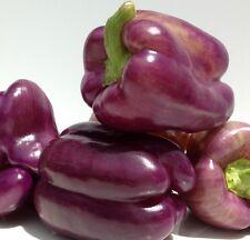 Rare Lilac sweet pepper 40+ fresh organic seed for the 2018 season.