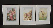 Flower Fairies Cicely M. Barker 3 Prints  c1940 G1#30
