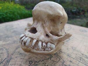PUG skull Dog Decoration of bone Unusual skull gift Gothic decor Anatomical gift