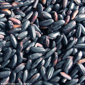 Chinese black rice GD planted 1pc