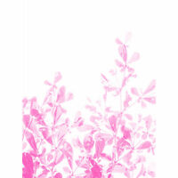 Magenta Plant Monochrome Pink Large Canvas Wall Art Print