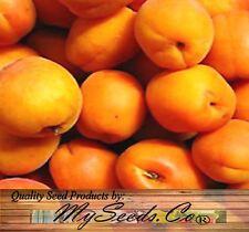 5 x Apricot Armeniaca - Prunus armeniaca Tree Seeds