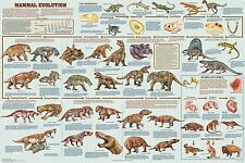 (LAMINATED) MAMMAL EVOLUTION POSTER (61x91cm) EDUCATIONAL WALL CHART PICTURE ART