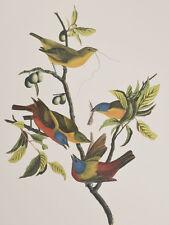 Audubon - Painted Finch. 53 - Birds of America Abbeville Edition FOLIO