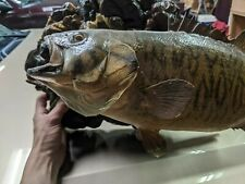 Rock Bass, Rock & Driftwood background, preowned original taxidermy