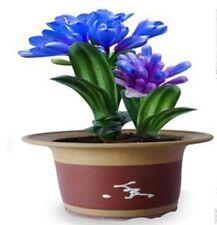 Blue Color Clivia Seeds Beautiful Flowers Bonsai Garden Decorative 100 Seeds