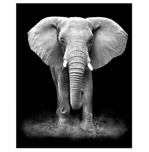 Animal Wall Art Canvas Painting Elephant Posters Prints Wall Pictures Home Decor