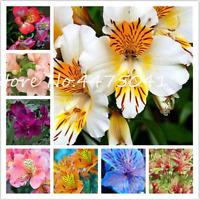 100 PCS Seeds Alstroemeria Bonsai Rare Lily Flowers Plants Free Shipping 2019 N