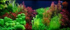 New listing live aquarium plants 50 Stems Cuttings! Colorful And Great Variety! Free S/H!
