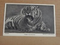 Postcard Tiger Whipsnade Park   Zoo unposted