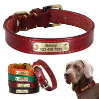 Leather Personalized Dog Collar with Heavy Duty Custom Brass Name Phone ID Tag