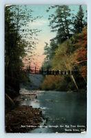 Santa Cruz, CA SAN LORENZO RIVER & SWINGING BRIDGE BIG TREES REDWOODS POSTCARD
