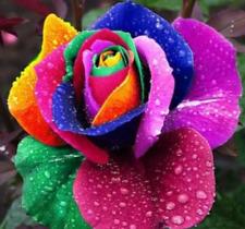 20 Rare Rainbow Rose Flower Seeds