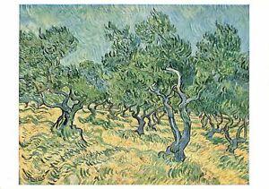 Vintage Art Postcard, Olive Trees at St. Remy by Vincent Van Gogh OI7