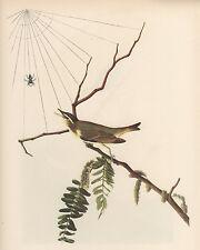 JAMES AUDUBON 1937 Book Print RED-EYED VIREO Birds of America Painting
