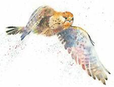 Fine Art Print of KESTREL watercolour by HELEN APRIL ROSE   602