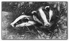 Badger Print PICTURE British Wildlife FINE ART animale immagini Sketch B/N Disegno