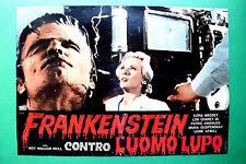 T01 FOTOBUSTA FRANKENSTEIN CONTRO L'UOMO LUPO LON CHANEY JR WOLF MAN HORROR 2