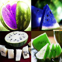 10x 5 Kinds Rare Sweet Watermelon Seeds Fruit Seed Green White Purple Red Blue