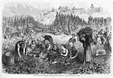 Preny, Lothringen, Hopfen-Ernte, Original-Holzstich von ca. 1880