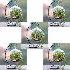 12cm Glass Ball Vase Flower Pot Terrarium Container Decor Metal Stand 5 Set