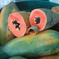 Caribbean Red Papaya Seed Sweet Tropical Fruit Vegetable 10 Seeds Free Shipping