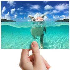 "Funny Swimming Pigs Bahamas Small Photograph 6"" x 4"" Art Print Photo Gift #8098"