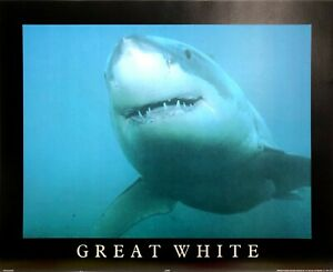 GREAT WHITE SHARK POSTER (40x50cm) PICTURE PRINT ART OCEAN BEACH JAWS SURFING