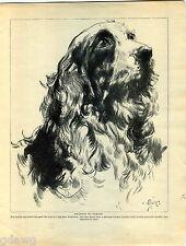 1930 Book Plate Print Cocker Spaniel Sketch Nicholson Serda-Junkermann Drawing