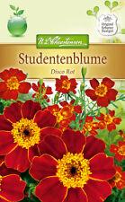 Studentenblume 'Disco Rot' - Tagetes patula, ca. 80 Samen 5256