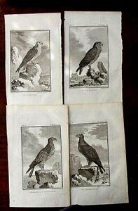 4 CIRCA 1775 BUFFON PRINTS...BIRDS OF PREY (F)