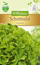 Pflücksalat 'Grünetta' - Lactuca sativa, Salat, ca. 200 Samen 4222